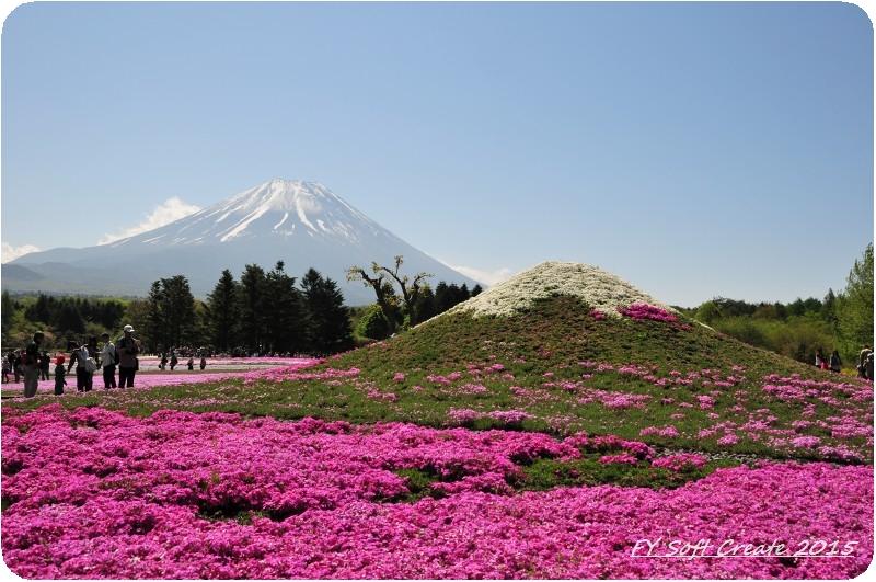 ◆ 1週間遅れのゴールデンウィーク、その1 「富士芝桜まつり」へ (2015年5月)_d0316868_9153750.jpg