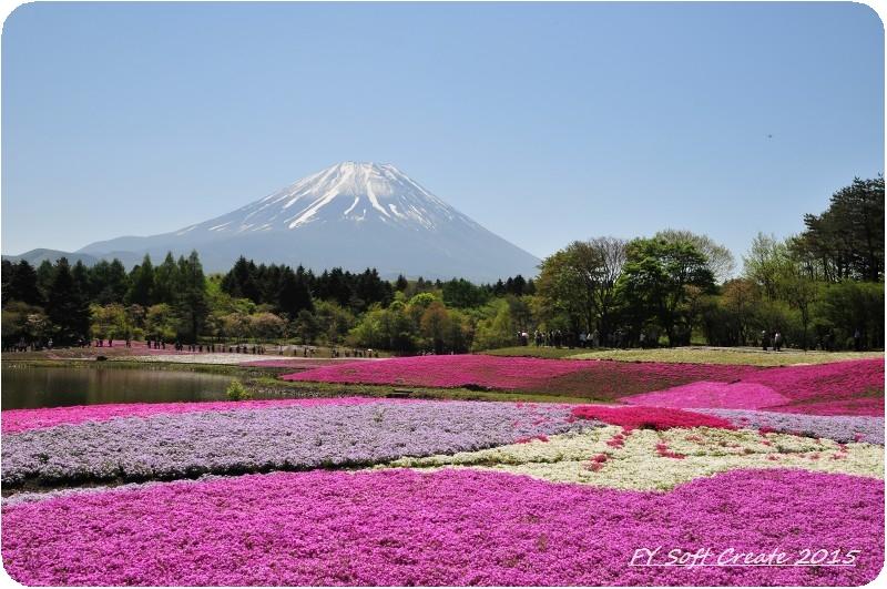 ◆ 1週間遅れのゴールデンウィーク、その1 「富士芝桜まつり」へ (2015年5月)_d0316868_932879.jpg