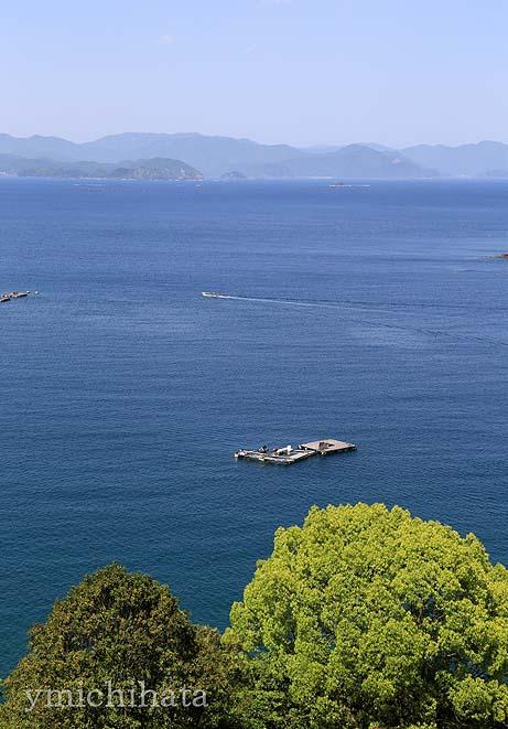 新緑の島勝浦_b0186680_11301624.jpg