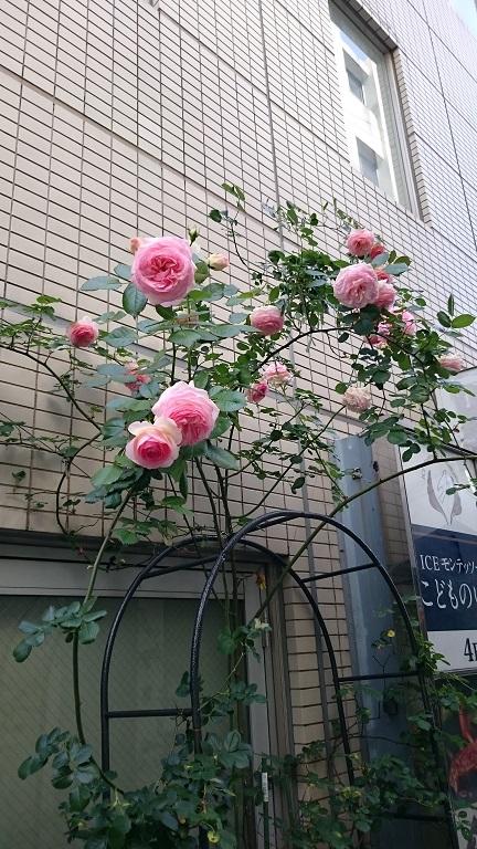 バラは愉し_d0155439_17341796.jpg