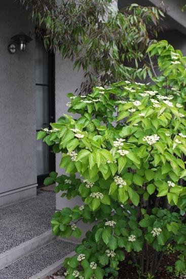 庭の緑のコンチェルト_a0303951_1140396.jpg