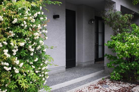 庭の緑のコンチェルト_a0303951_1140536.jpg