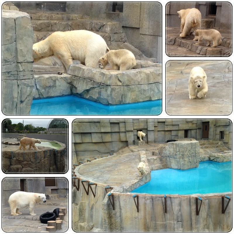 札幌円山動物園_b0236665_05482720.jpg
