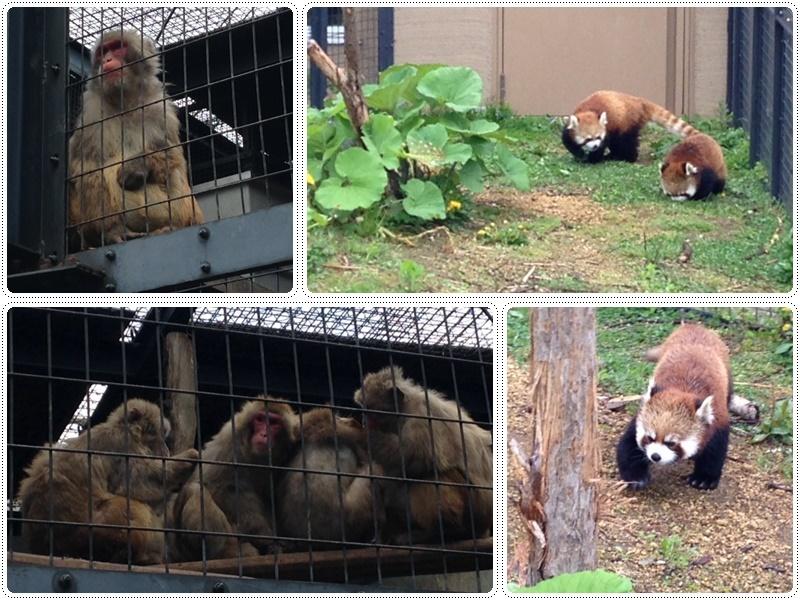 札幌円山動物園_b0236665_05492198.jpg