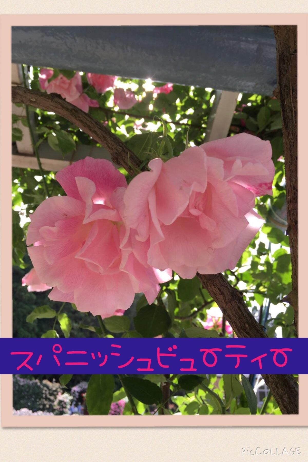 f0017897_22595138.jpg