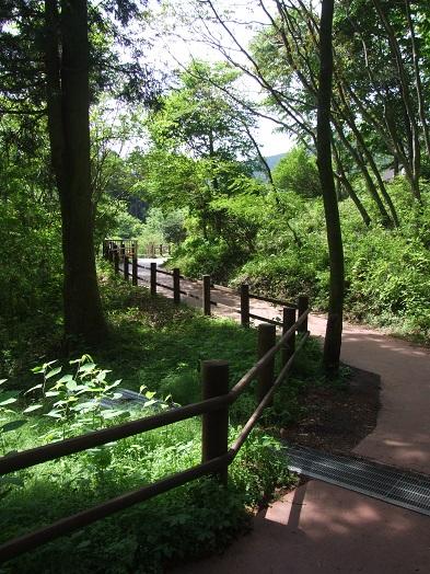 田貫湖ファミリーウォーキング大会_b0089338_10544752.jpg