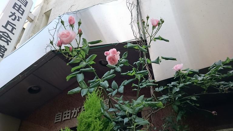 バラは愉し_d0155439_10225596.jpg