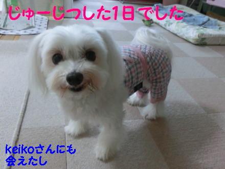 b0193480_16182741.jpg