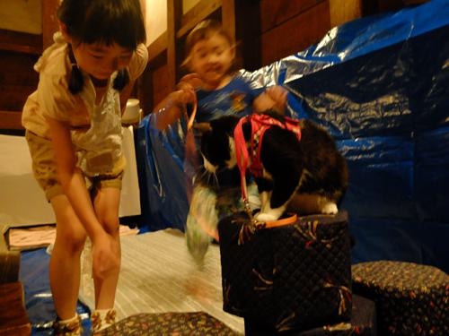 三社祭_a0180681_16213833.jpg