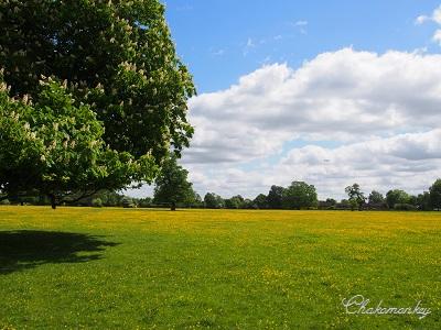 Osterley ParkのEnglish Bluebell_f0238789_190847.jpg