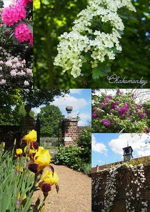 Osterley ParkのEnglish Bluebell_f0238789_19203374.jpg