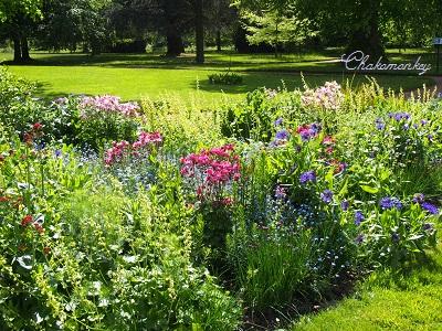 Osterley ParkのEnglish Bluebell_f0238789_19212997.jpg