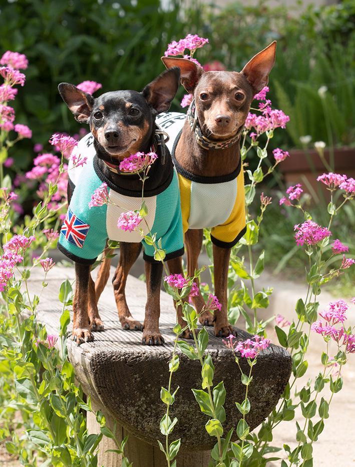 花のベンチ_d0164190_11224091.jpg