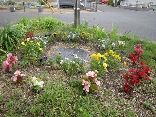 5月 園芸活動_a0158095_15395966.jpg