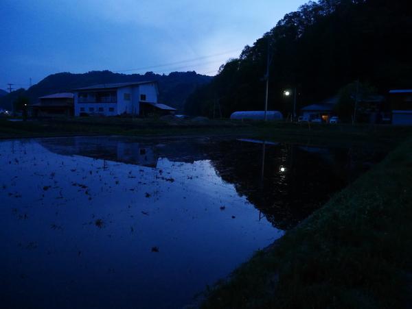 夕方散歩_f0227395_1113682.jpg
