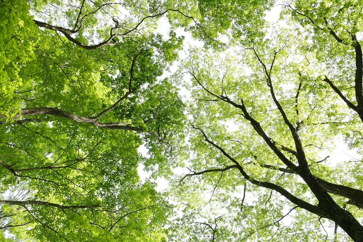 新緑の森_b0074098_23303684.jpg