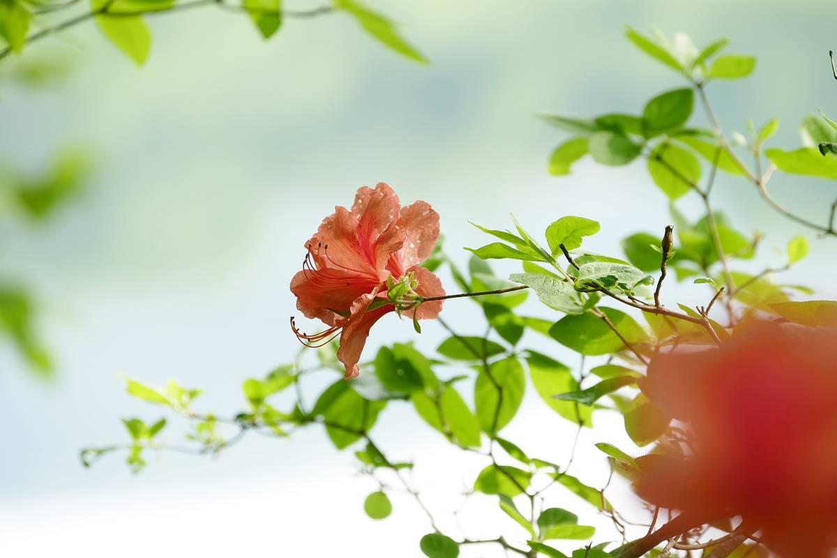 新緑の森_b0074098_23313361.jpg
