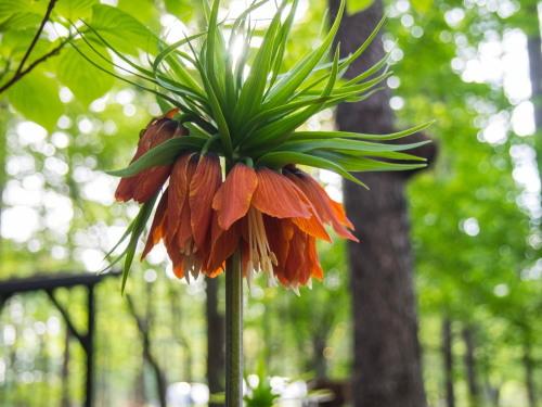 新緑の美しい5月・・春の花が次々と咲いてきました。_f0276498_23515985.jpg