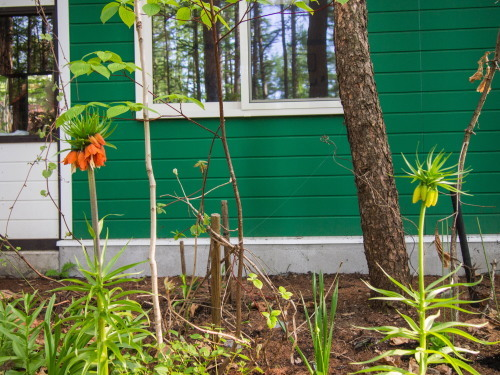 新緑の美しい5月・・春の花が次々と咲いてきました。_f0276498_23522060.jpg