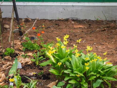 新緑の美しい5月・・春の花が次々と咲いてきました。_f0276498_23525336.jpg