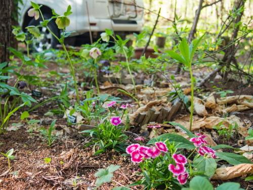 新緑の美しい5月・・春の花が次々と咲いてきました。_f0276498_23533799.jpg