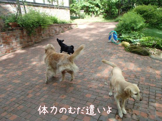 木陰_f0064906_1695878.jpg