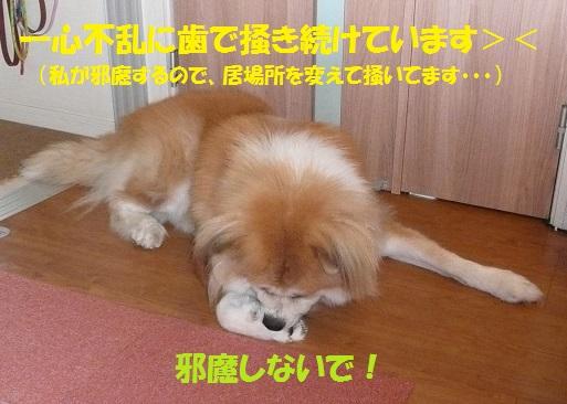 f0121712_15501778.jpg