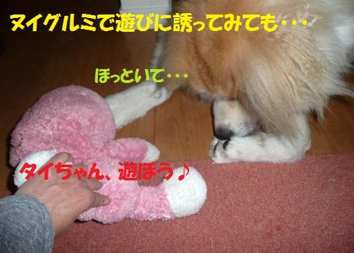 f0121712_155058.jpg