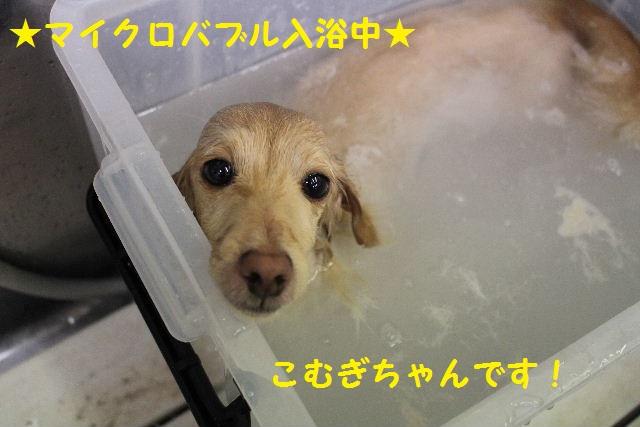 b0130018_12591458.jpg