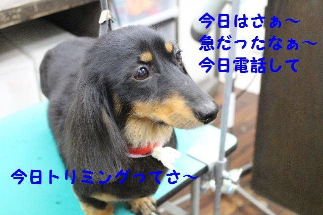 b0130018_1323511.jpg