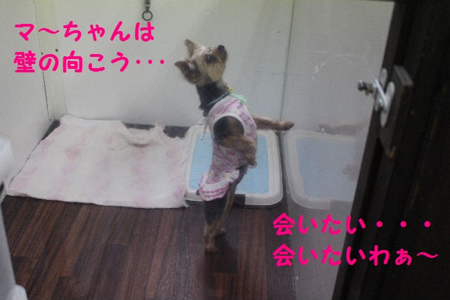 b0130018_136472.jpg