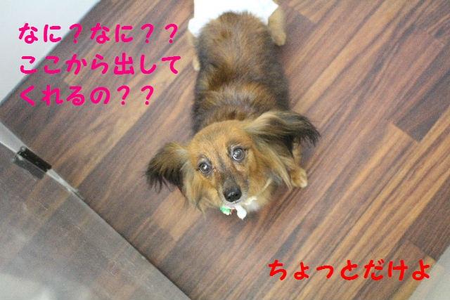 b0130018_14153210.jpg