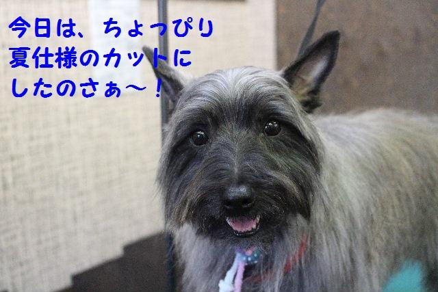 b0130018_1494148.jpg