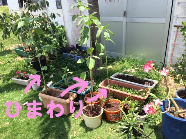5月19日 夏を感じます。_b0158746_16371774.jpg