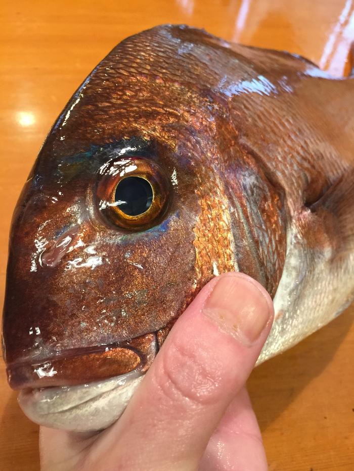 鯛のアイシャドゥは新鮮な証拠\(^0^)/_c0110051_23523733.jpg