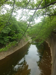 Shakujii Riverその1  新緑×紫陽花×スカイツリー!!_a0165160_07280151.jpg