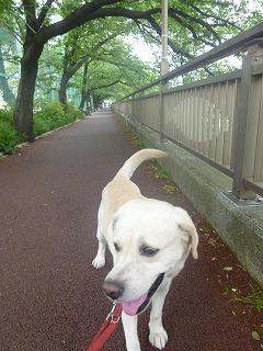 Shakujii Riverその1  新緑×紫陽花×スカイツリー!!_a0165160_07443666.jpg
