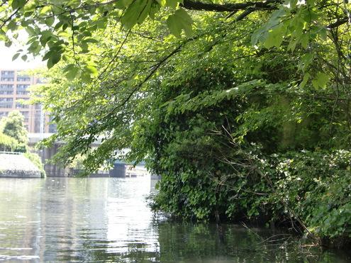 水門から外の風景_c0249569_13571696.jpg