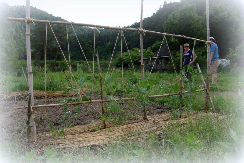 苗植え その2_c0057390_2257919.jpg
