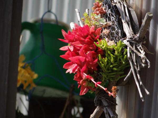 多肉植物、今年も山草棚へ。 小さなタブローと柳生真吾さんのことなど_a0136293_18245459.jpg