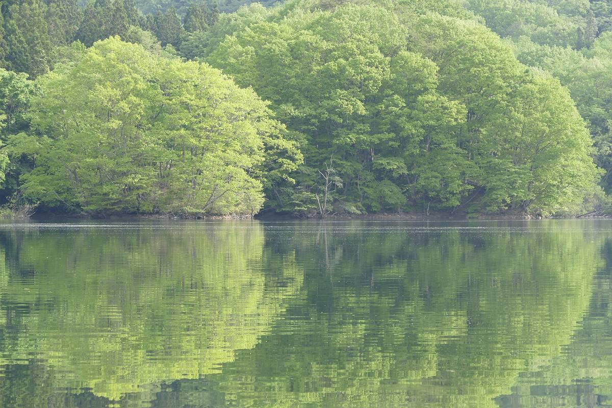 新緑の森_b0074098_519518.jpg