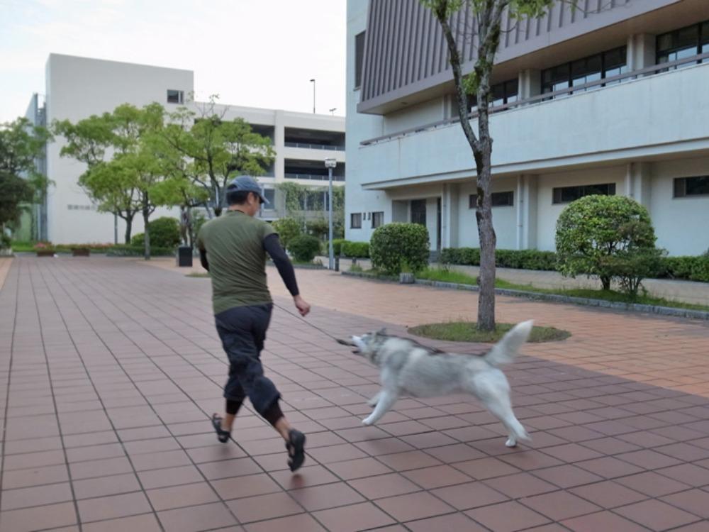 充実のお散歩? (^o^)_c0049299_22471290.jpg