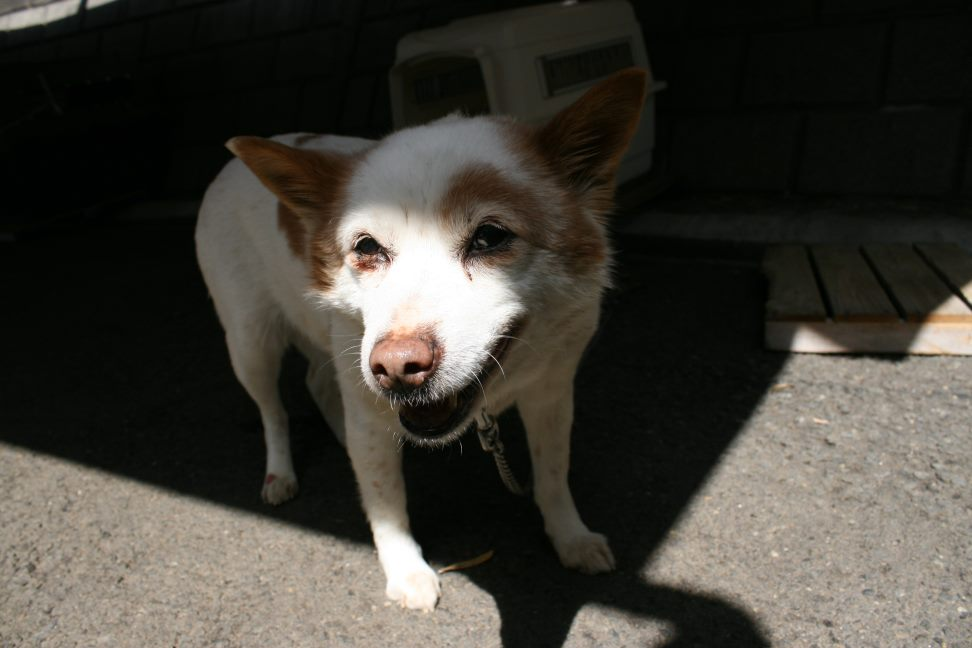 【募集】6才ラブとセンターの老犬_f0242002_0111653.jpg