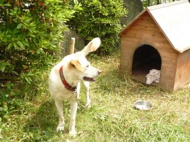 【募集】6才ラブとセンターの老犬_f0242002_0194178.jpg