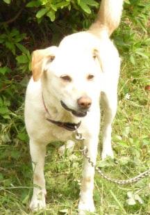 【募集】6才ラブとセンターの老犬_f0242002_021644.jpg