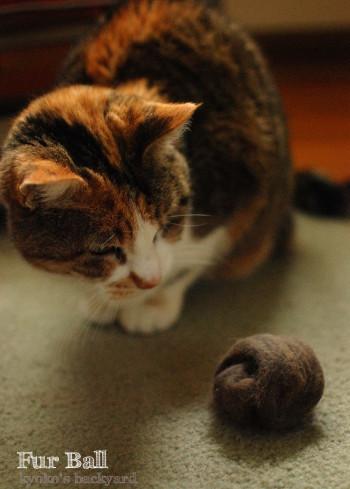 猫の毛のボール_b0253205_07025436.jpg