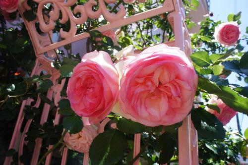 シチリアの初夏~テーブルコーディネート~ 薔薇も満開!_f0215714_16352378.jpg