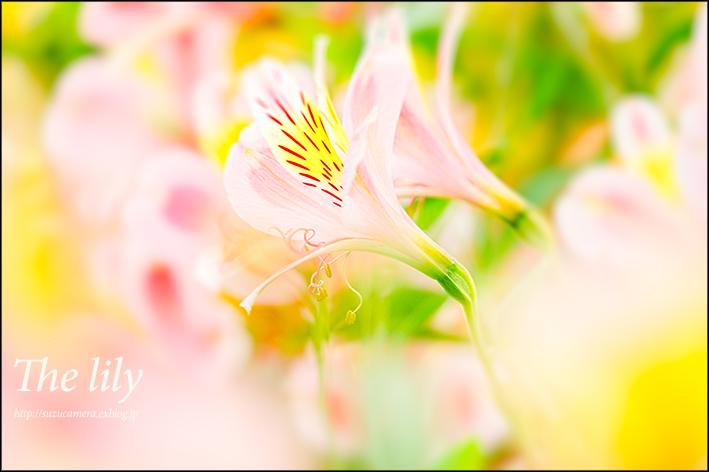 世羅ゆり園_f0100215_19431939.jpg