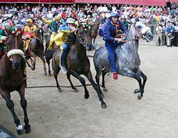 競馬へのあこがれ シエナのパーリオ_b0074416_18322853.jpg