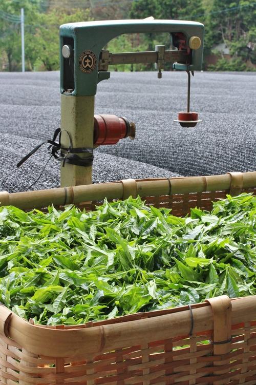 いしかわ製茶しもやま高原農場さんへ_b0220318_6224198.jpg
